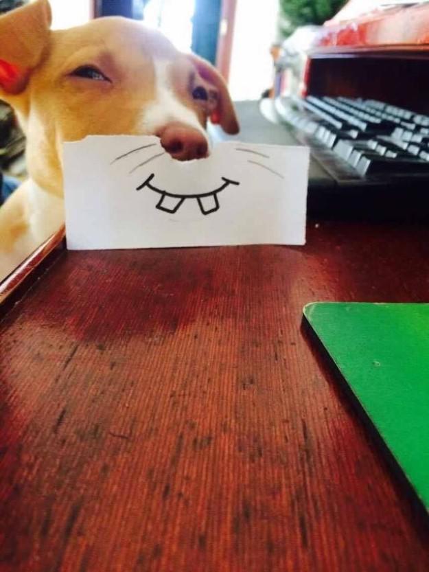 σκυλί-13