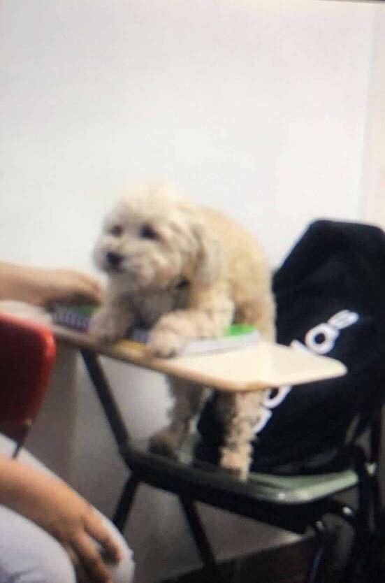 σκυλί-2