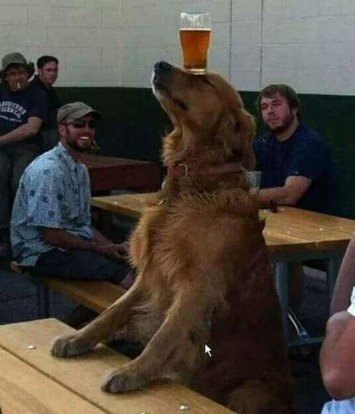 σκυλί-3