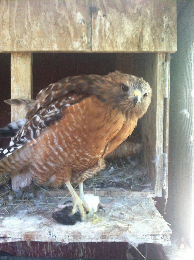 Πόσο μεγάλο μπορεί να είναι το πουλί σου