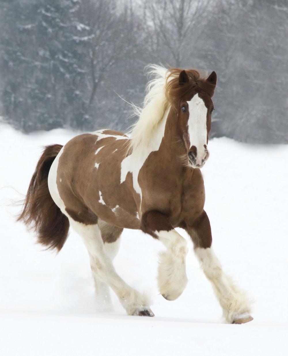 Resultado de imagen para caballos mas bellos del mundo
