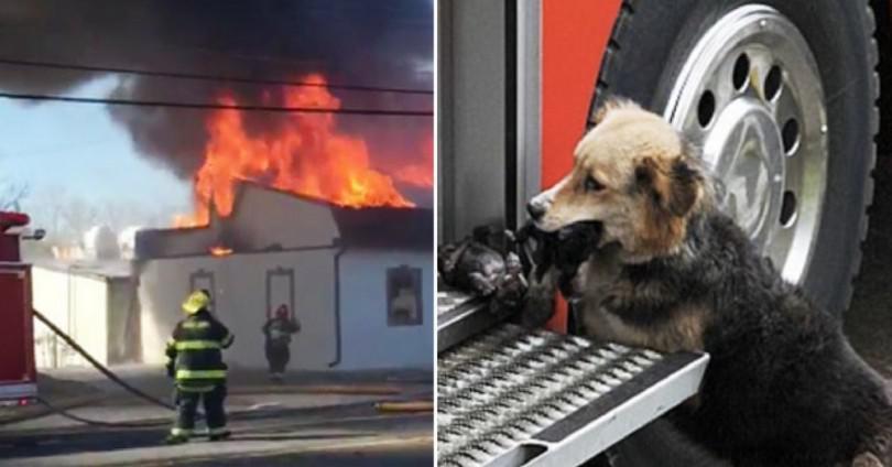 Είδαν το σκυλί να βγαίνει από το φλεγόμενο σπίτι κρατώντας κάτι στο στόμα. Μόλις κατάλαβαν τι ήταν, δεν πίστευαν στα μάτια τους