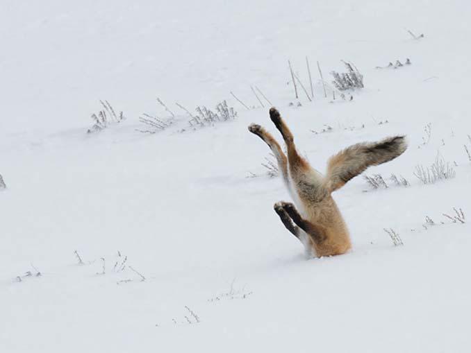Φωτογραφίες της άγριας ζωής σε όλο της το μεγαλείο (2)