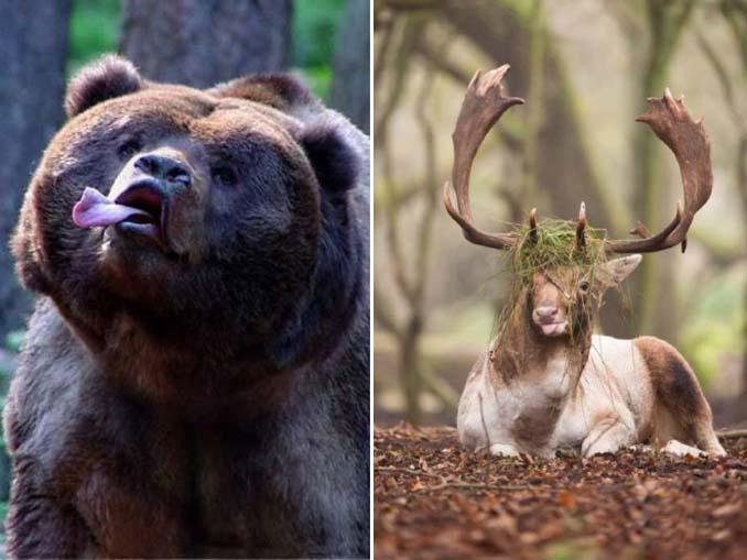 Φωτογραφίες της άγριας ζωής σε όλο της το μεγαλείο (4)