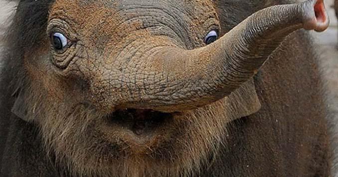 Φωτογραφίες της άγριας ζωής σε όλο της το μεγαλείο (8)