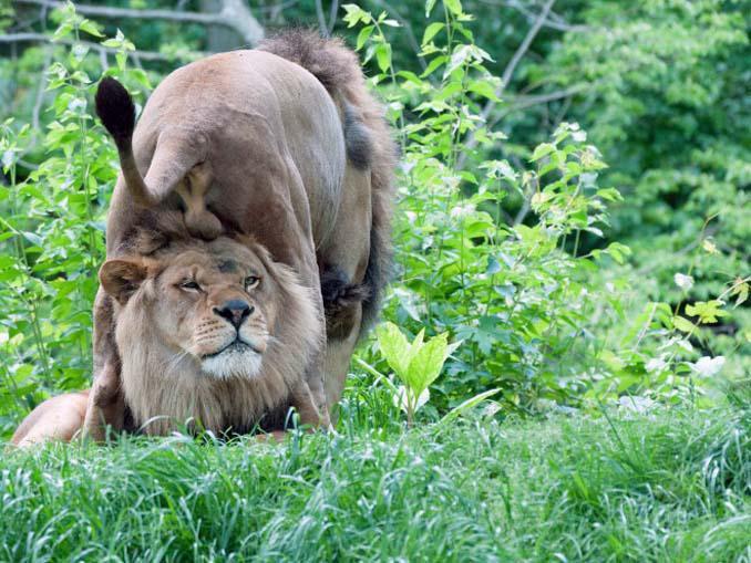 Φωτογραφίες της άγριας ζωής σε όλο της το μεγαλείο (17)