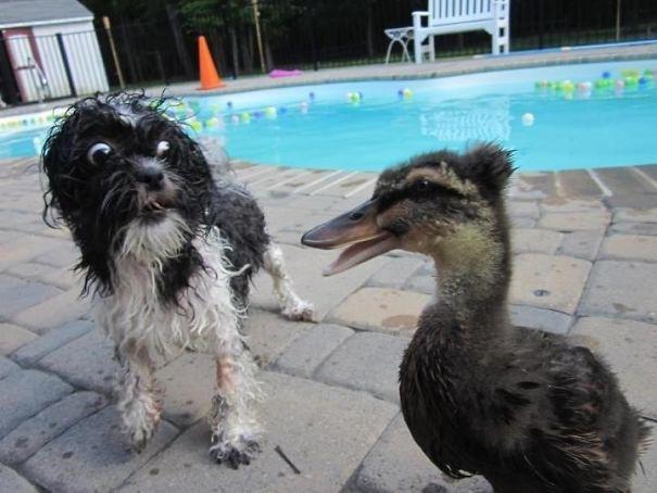 Σκύλοι που φοβούνται τα πιο απίθανα πράγματα (7)