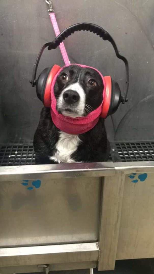 Σκύλοι που φοβούνται τα πιο απίθανα πράγματα (8)