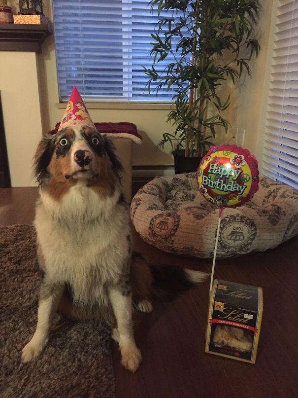 Σκύλοι που φοβούνται τα πιο απίθανα πράγματα (9)