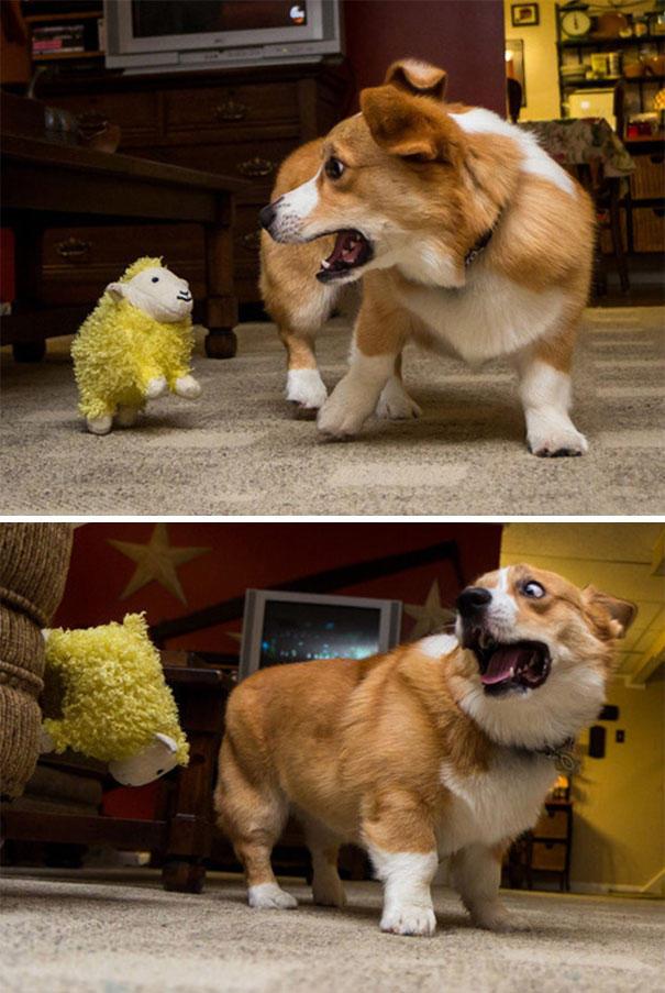 Σκύλοι που φοβούνται τα πιο απίθανα πράγματα (14)