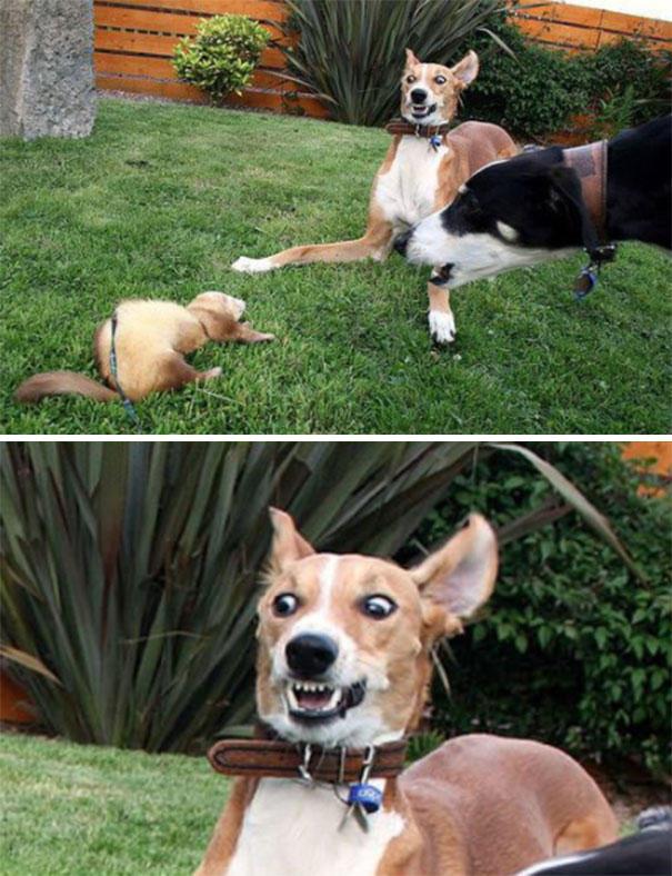 Σκύλοι που φοβούνται τα πιο απίθανα πράγματα (18)