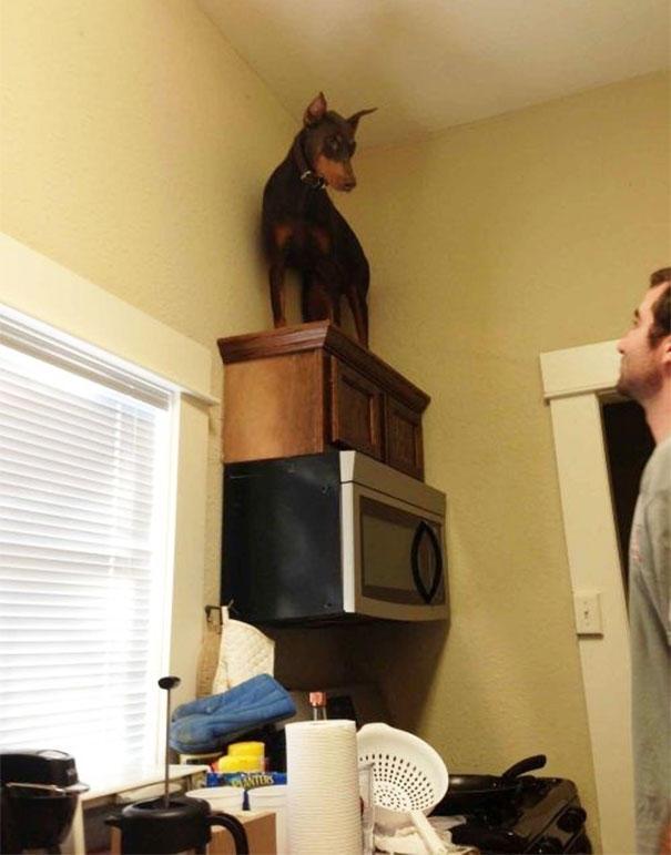 Σκύλοι που φοβούνται τα πιο απίθανα πράγματα (20)