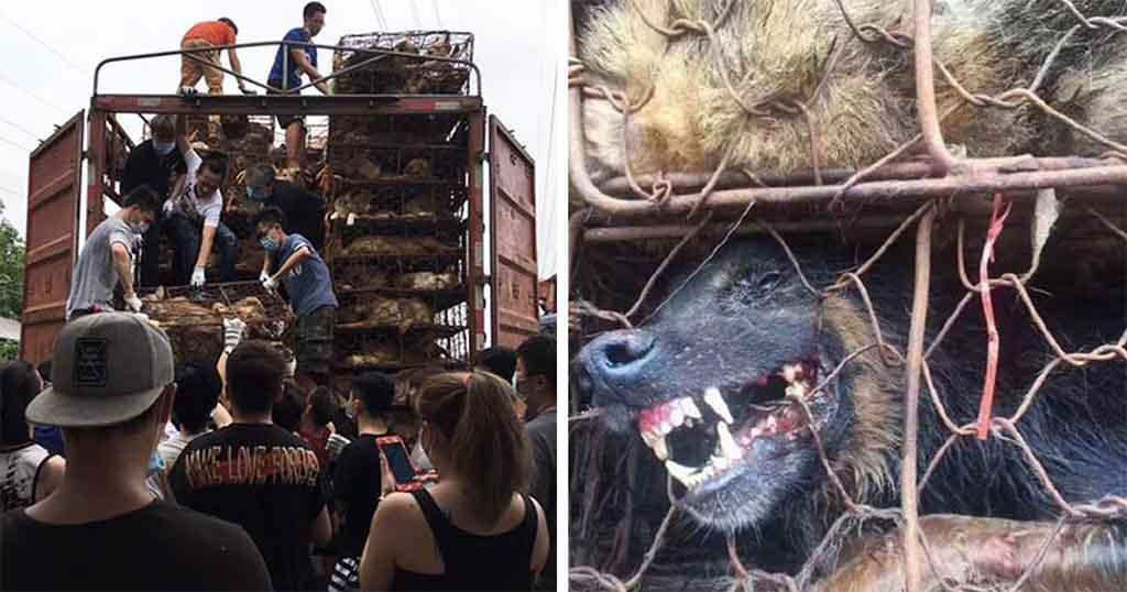 Άντρας βλέπει φορτηγό γεμάτο με 1000 σκυλιά προς σφαγή το σταματάει και τα απελευθερώνει όλα
