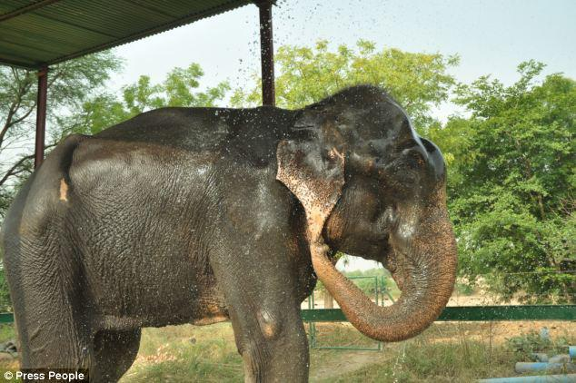Later Raju enjoyed a cool shower and felt elated