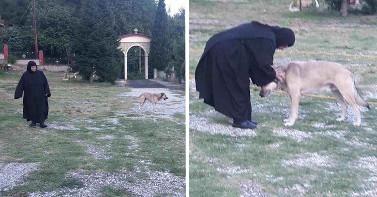 Ο σκυλάκος που κακοποιήθηκε από τον «ιδιοκτήτη» βασανιστή του ζει ευτυχισμένος στην ιερά μονή της Παναγίας Γουμεράς στη Μακρυνίτσα Σερρών