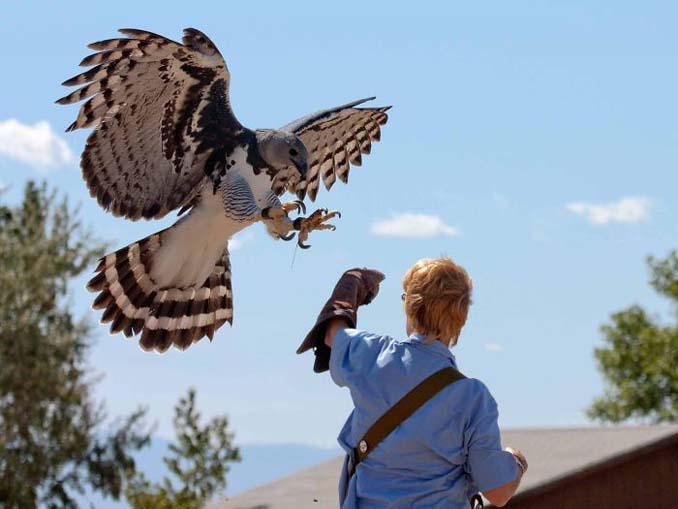 Ένα από τα μεγαλύτερα πτηνά στον κόσμο (3)