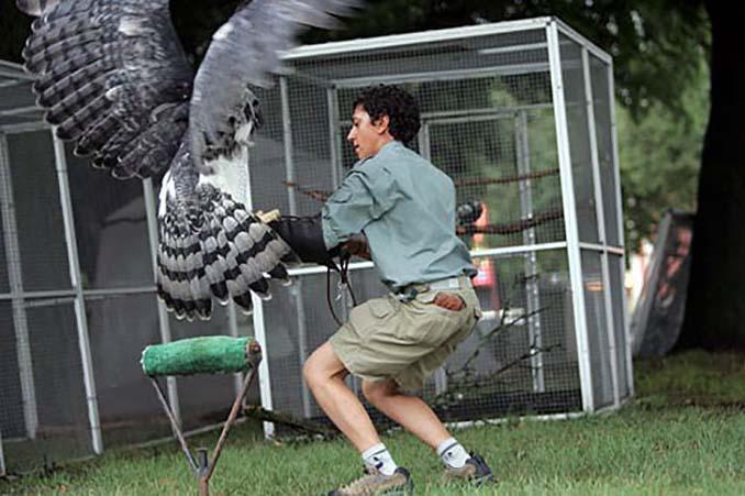 Ένα από τα μεγαλύτερα πτηνά στον κόσμο (7)