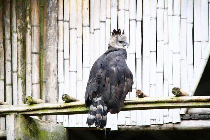 Ένα από τα μεγαλύτερα πτηνά στον κόσμο (8)