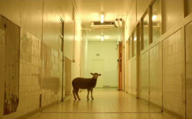 «Λαιμός καρδιά στομάχι»: Η νέα ταινία της Μωντ Αλπί δείχνει την σκληρή αλήθεια στα σφαγεία ζώων