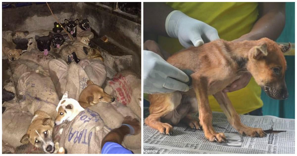 Δεκάδες σκυλιά στοιβαγμένα σε τσάντες σώθηκαν λίγο πριν τα βράσουν ζωντανά και τα φάνε