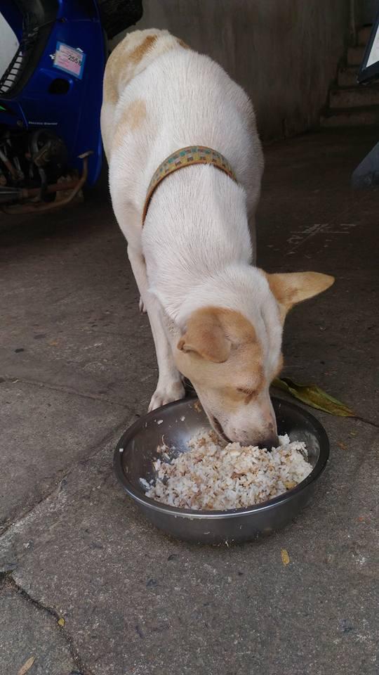 Αδέσποτο κουτάβι εμφανίζεται κάθε μέρα με ένα φύλλο στο στόμα του σαν «ευχαριστώ» για το φαγητό που του προσφέρουν