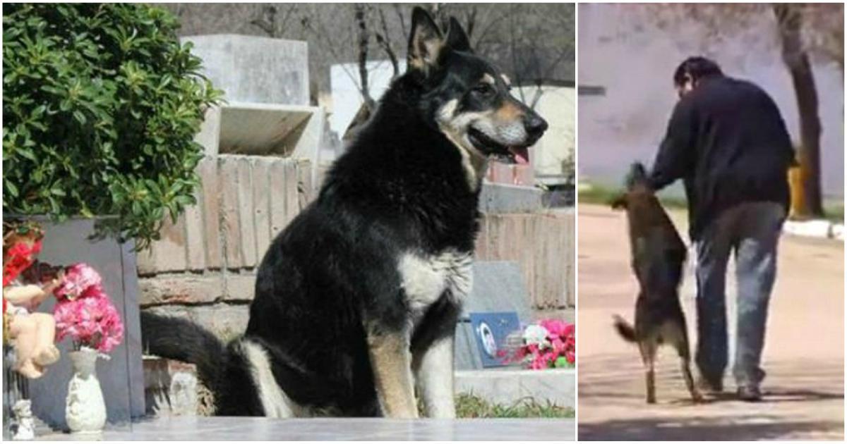 Πέθανε ο σκύλος που επί 11 χρόνια κοιμόταν δίπλα στον τάφο του αφεντικού του