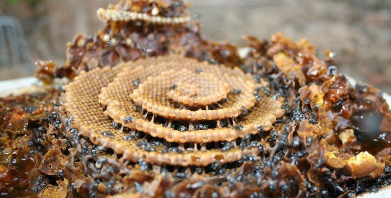 Μέλισσες δημιουργούν κυψέλες με περίτεχνα σχέδια για άγνωστο λόγο
