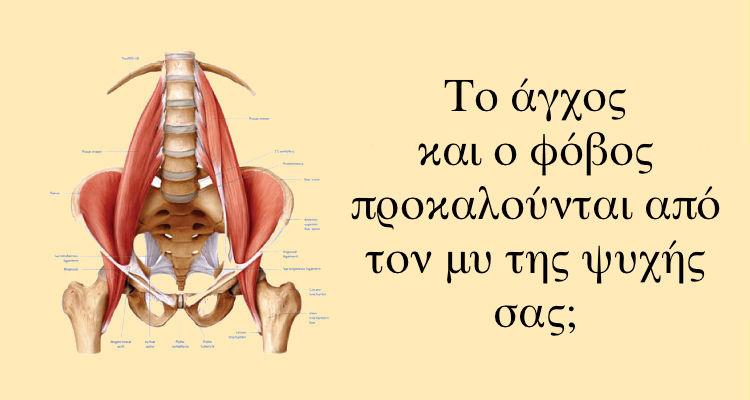 Αποτέλεσμα εικόνας για Ψοΐτης μυς: Ο μυς της Ψυχής