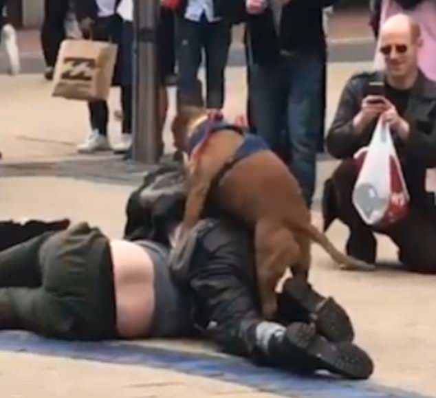 Happy hump day: The two combatants, seen fighting on a street in Ireland, appeared un-bothered by the humping dog