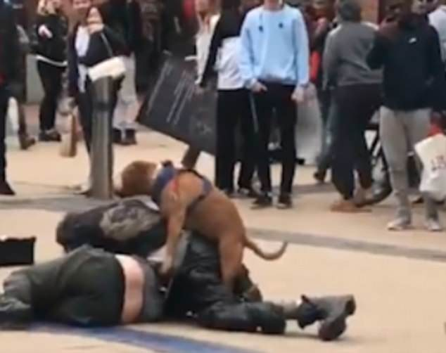 Make love not war: As the two men were fighting on the ground, the dog ran up to them and began climbing on them