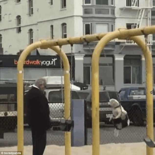 An elderly man gives his beloved pet dog a push on a swing set in this adorable snap