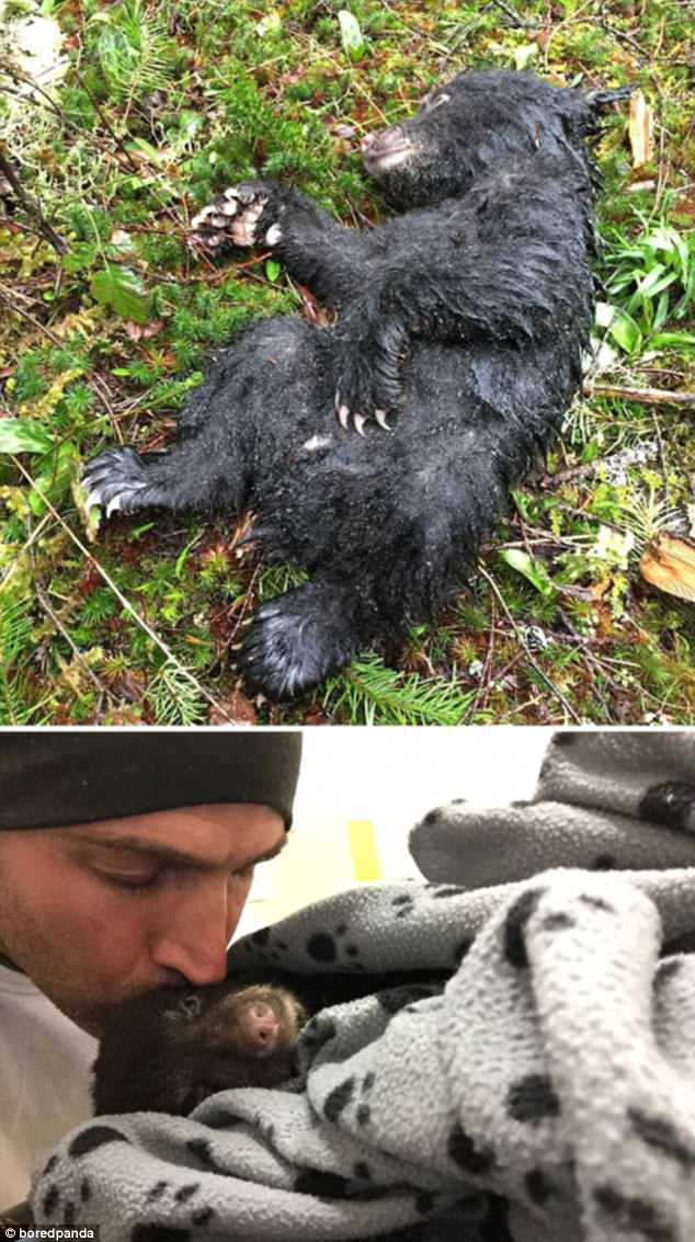 A man who came across an injured bear on a hike managed to nurse it back to health