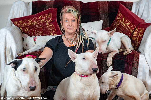 Committed: Liz Haslam, pictured above with five of her thirty bull terriers, chose her hoard of dogs over her husband of 25 years