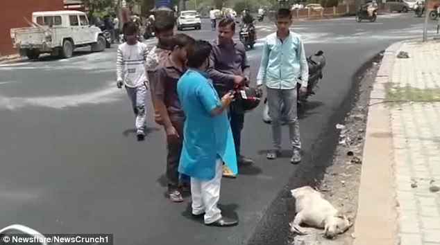 The animal died in agony after burning tar was poured over it during work on a road surface near the Taj Mahal in Agra