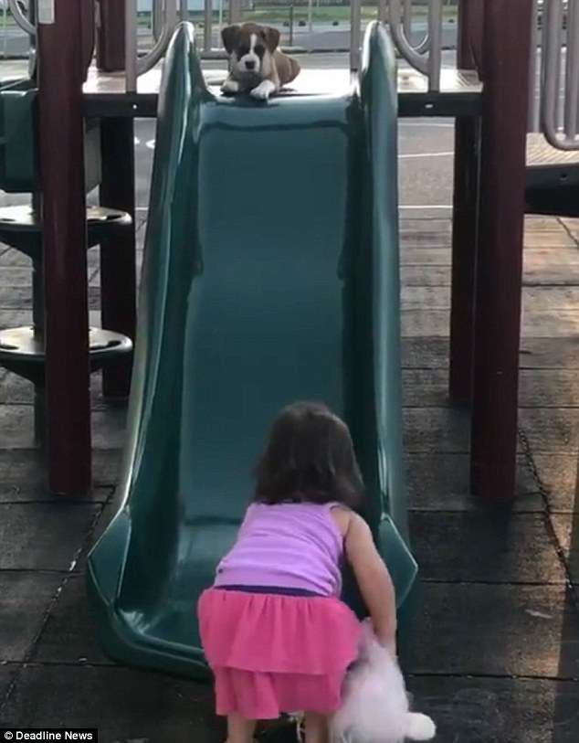 The dynamic duo then went back for round two, and this time Franny barely hesitated before jumping on the green slide and riding it to the ground