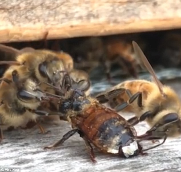 After a full clean the bee is fortunately alright and flies away to go off and pollinate some more flowers in Michigan