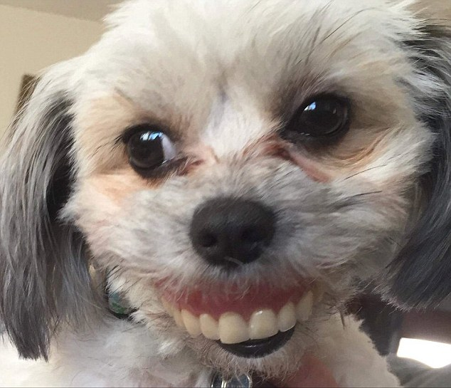 Proud: A man woke up to his daughter's dog wearing his dentures after he took them out briefly for an afternoon snooze