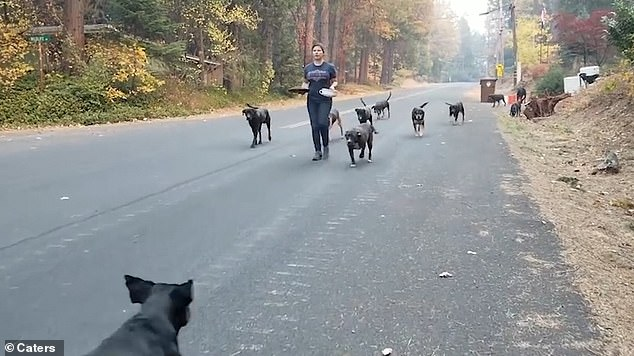 The rescuers helped save 17 dogs in total with 13 of them happily wagging their tails together