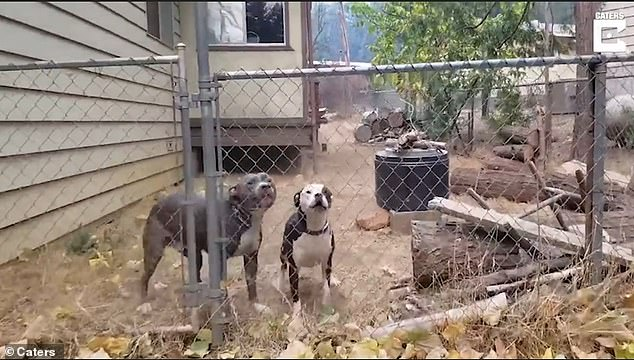 These two excited hounds were found just 20 feet away from a house that was destroyed by fire