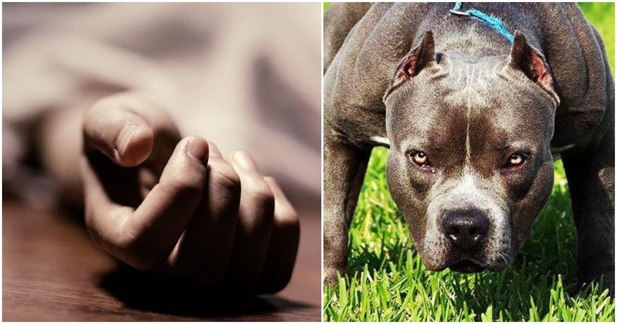Φρίκη στην Κυψέλη: 60χρονη γυναίκα πέθανε στο σπίτι της και το σκυλί της άρχισε να την τρώει επειδή δεν είχε τροφή