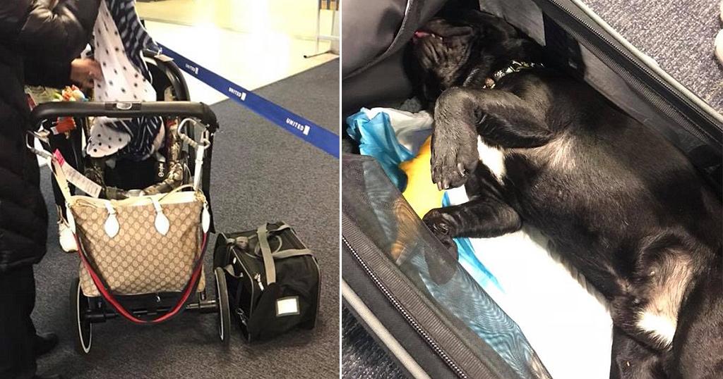 Κουτάβι πέθανε σε πτήση επειδή η αεροσυνοδός το τοποθέτησε σε ντουλαπάκι αποσκευών
