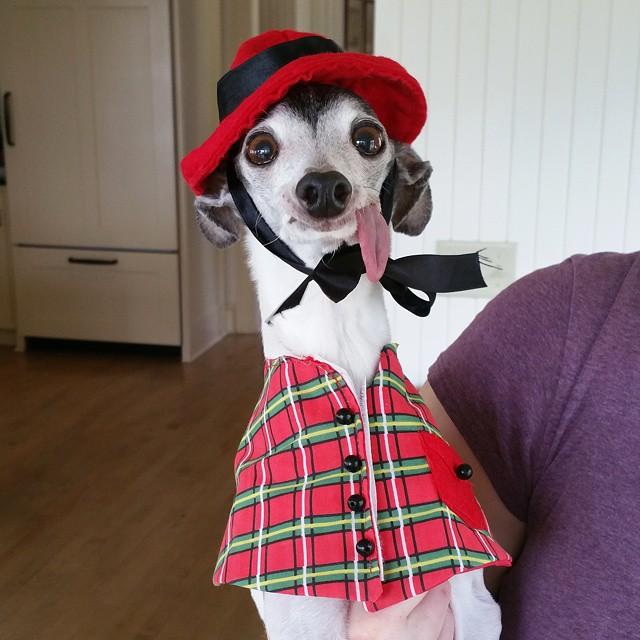 Γνωρίστε τον Zappa, τον σκύλο που μοιάζει λες και βγήκε από ταινία κινουμένων σχεδίων +++Π - Εικόνα 3