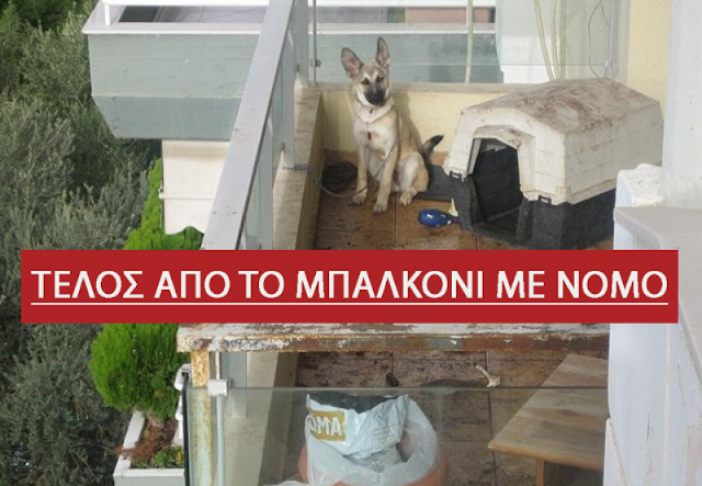 Σκυλιά στο μπαλκόνι ΤΕΛΟΣ– Τι λέει ο νόμος και ποια είναι τα πρόστιμα