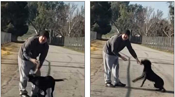 Άντρας εγκαταλείπει το σκύλο του και το ζώο δεν μπορεί να το πιστέψει και νομίζει ότι παίζουν