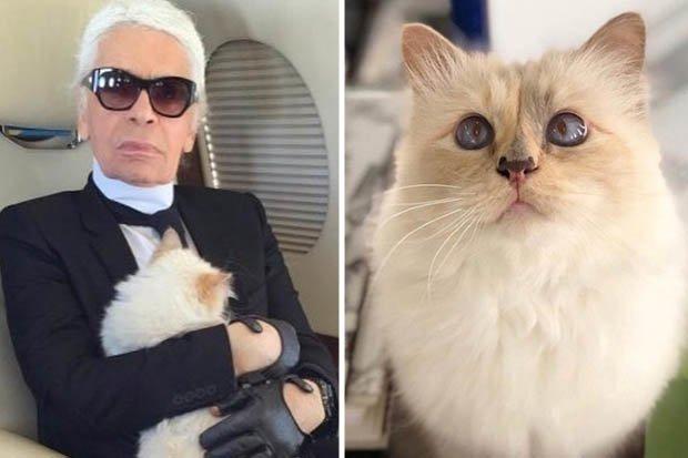 d8f46ca07dde Η γάτα του Καρλ Λάγκερφελντ θα κληρονομήσει 150 εκατομμύρια λίρες ...