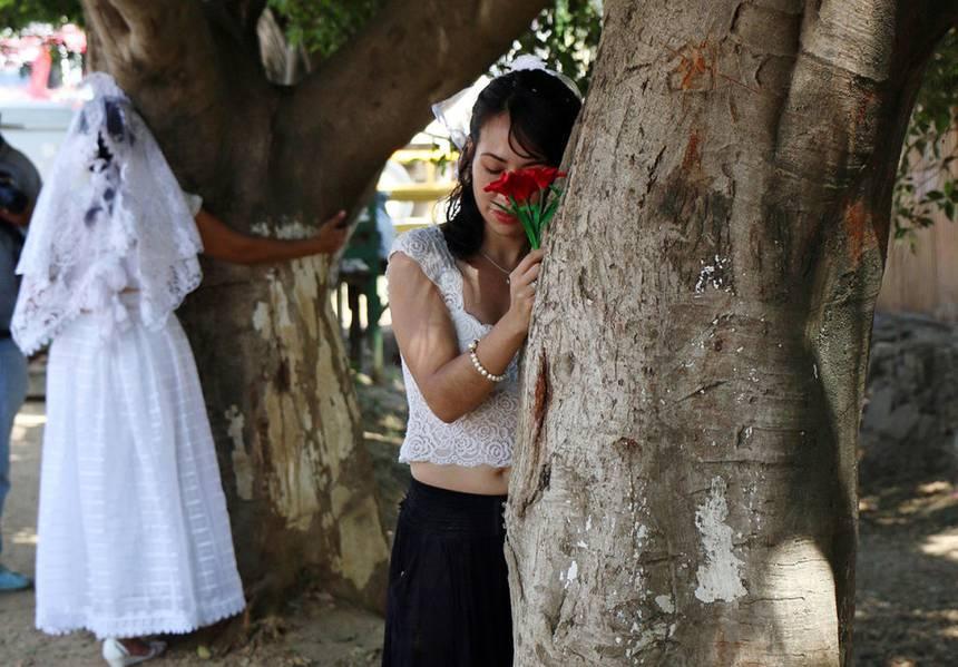 Γυναίκες στο Μεξικό παντρεύονται δέντρα για να τα σώσουν 3