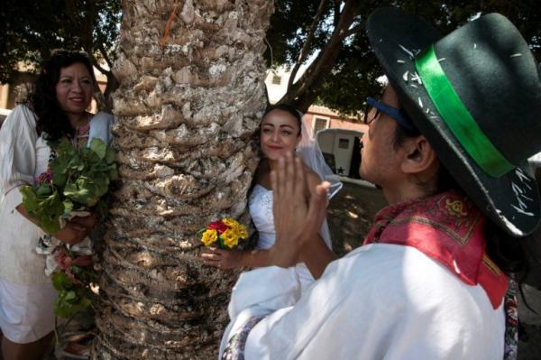 Γυναίκες στο Μεξικό παντρεύονται δέντρα για να τα σώσουν 8
