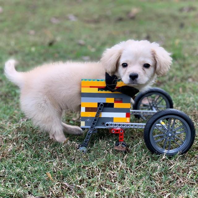 4Perrita con ingeniosa silla de ruedas