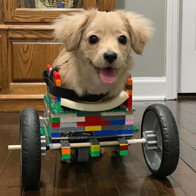 7Perrita con silla de ruedas de legos