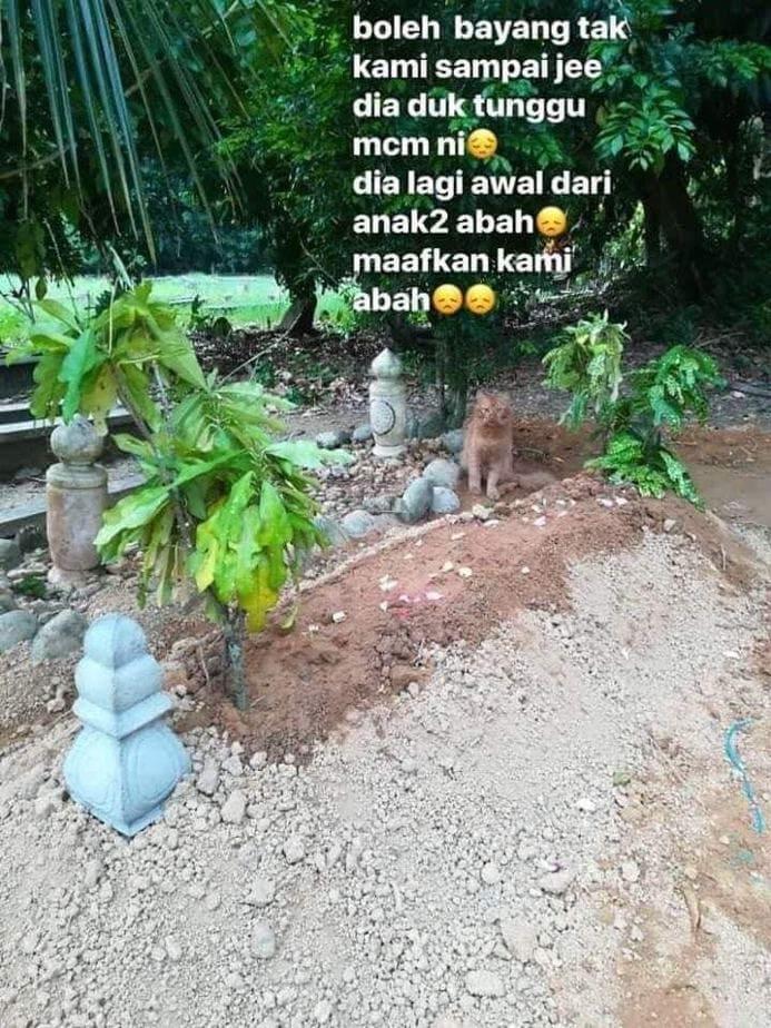 gata tafos malaisia 2